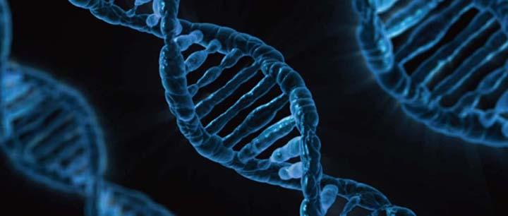 人間は遺伝子レベルで朝型