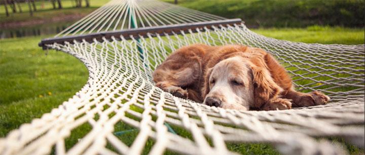 ハンモックで寝る犬